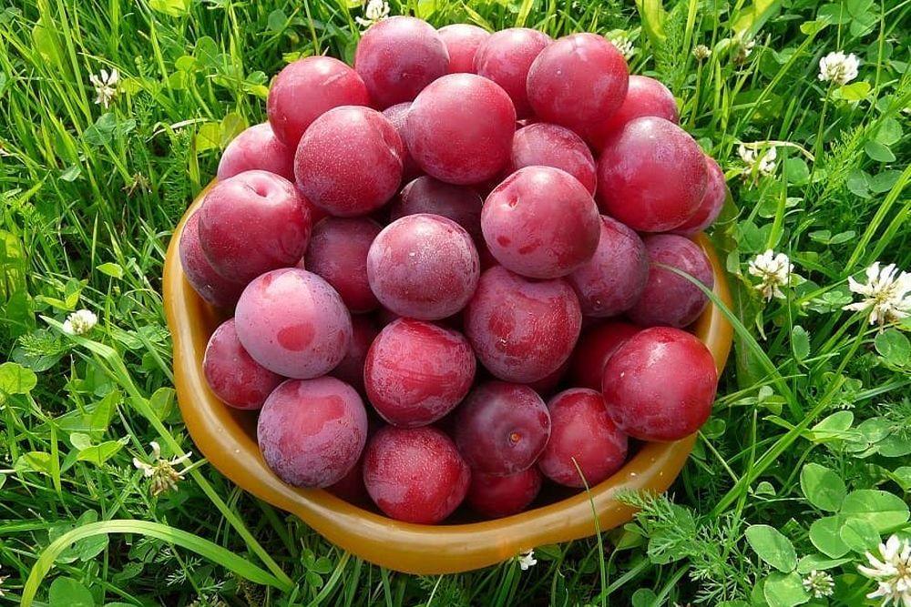 Как хранить плоды