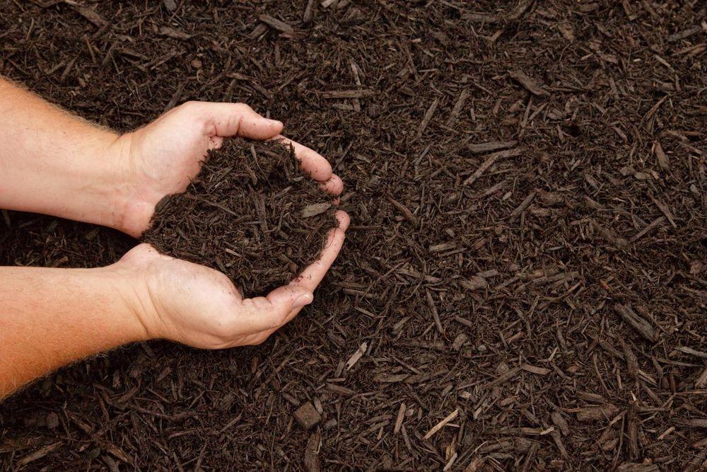 Почва для медвежьего ушка