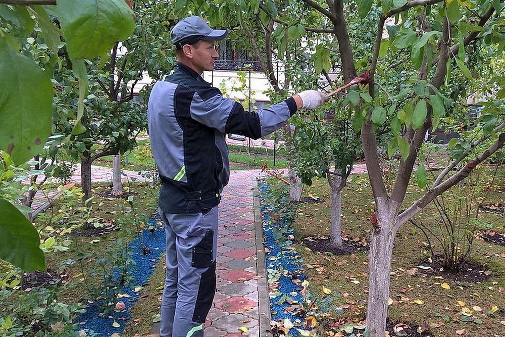 Уход за абрикосовым деревом после обрезки
