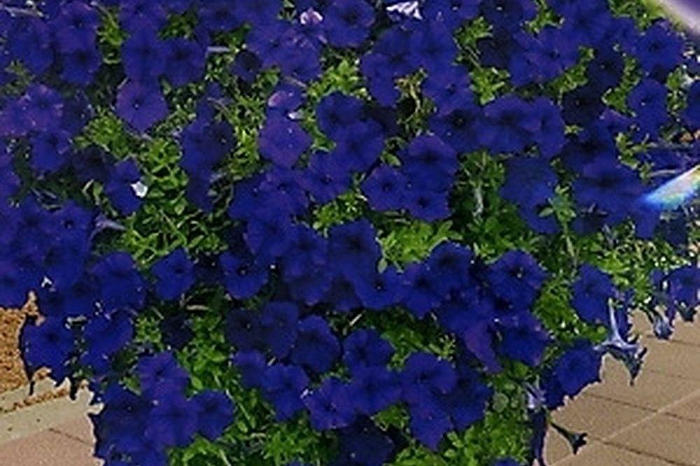 Мини синий бархат