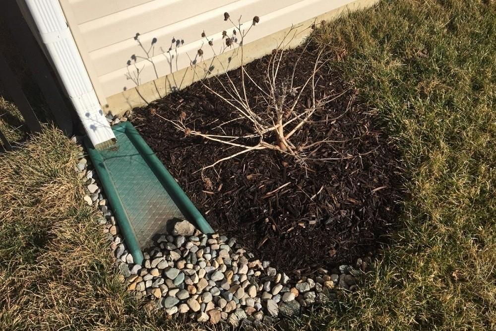 Подготовка растения к зимовке в грунте