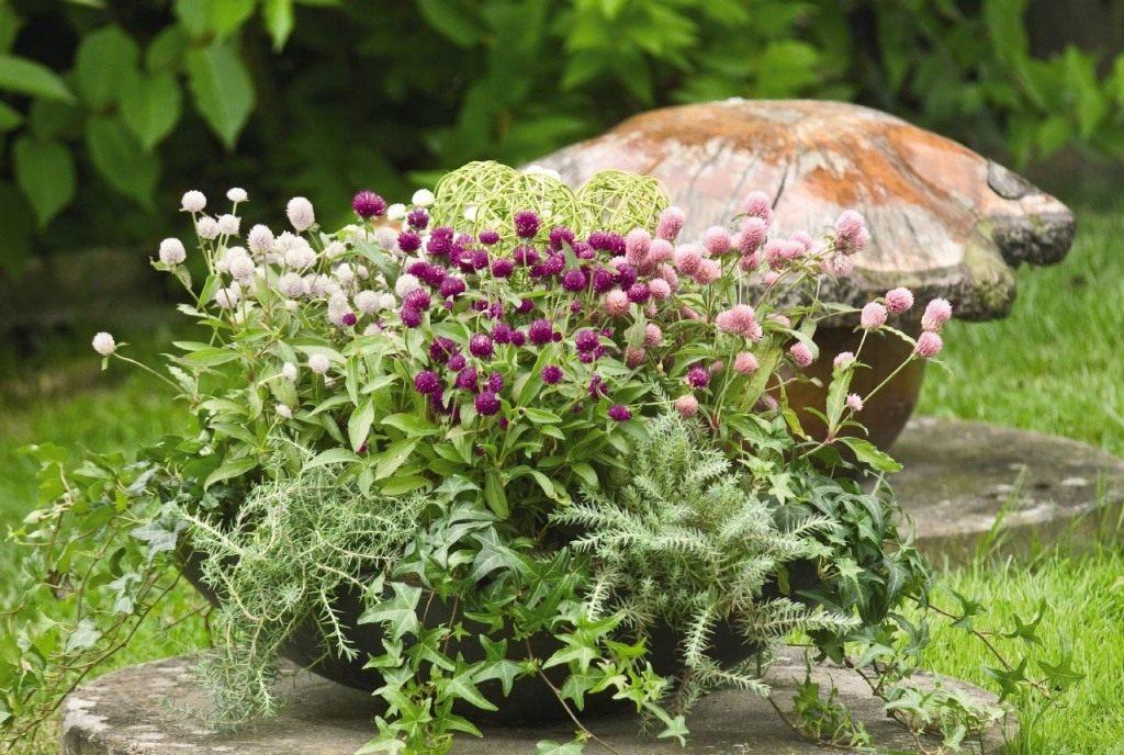 Условия для выращивания растения