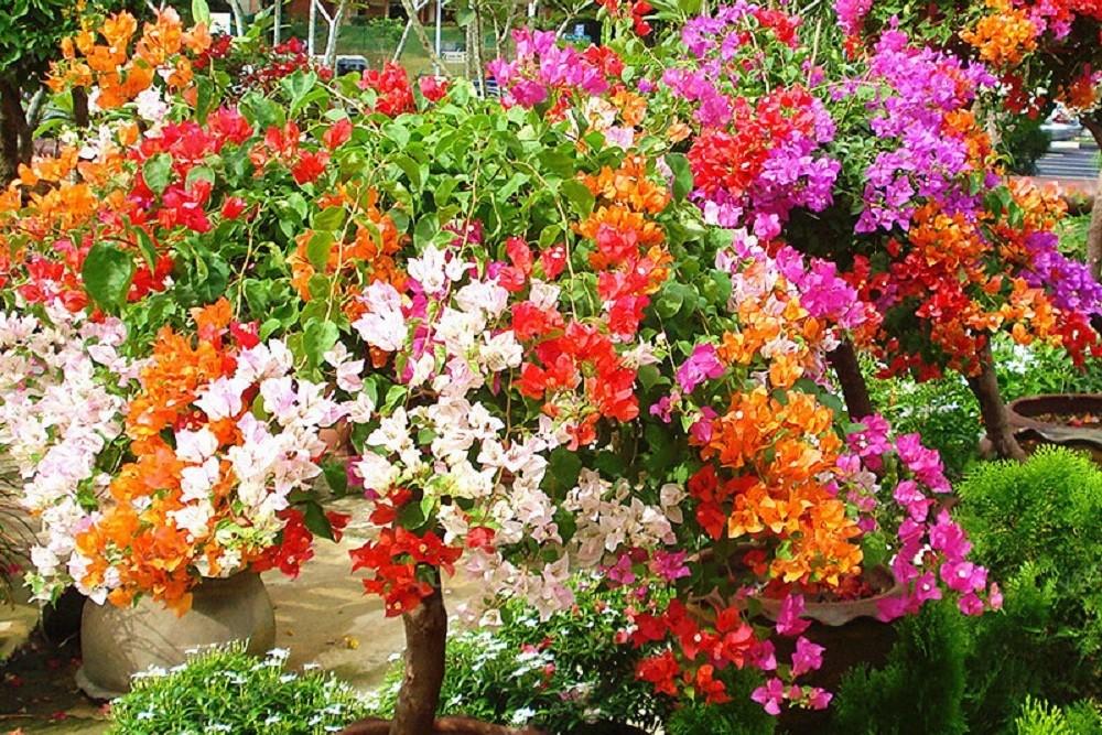 Куст с разной окраской цветов
