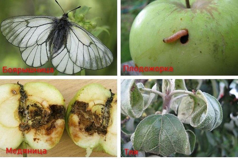 Вредители плодовых