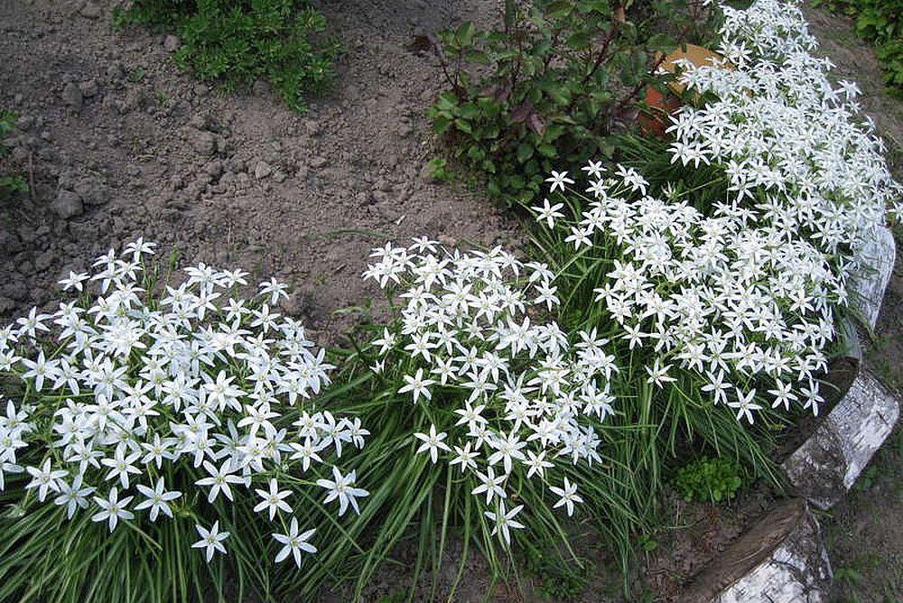 Цветы в ландшафтном оформлении