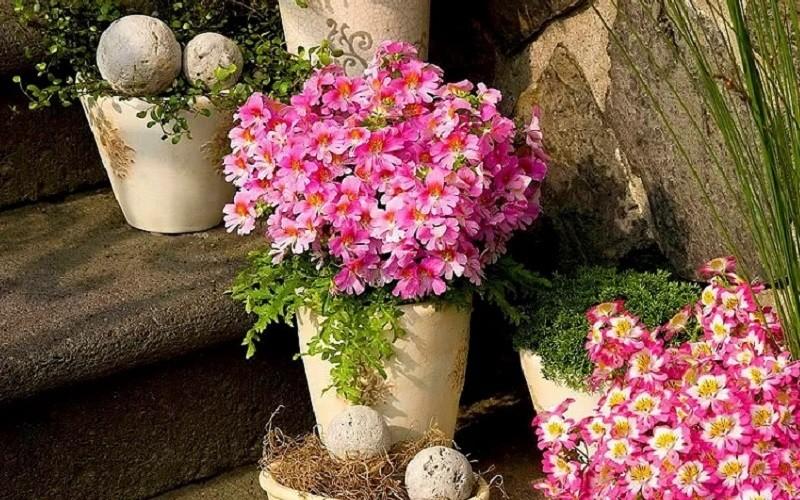 Цветы в вазоне