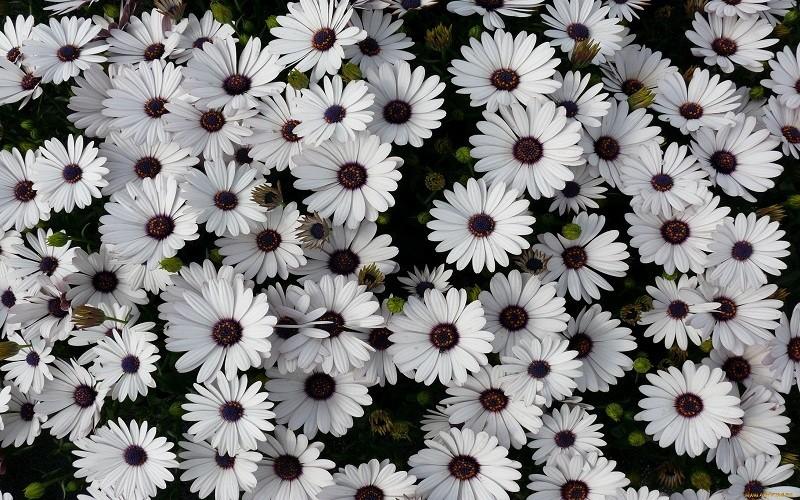 фото цветка1