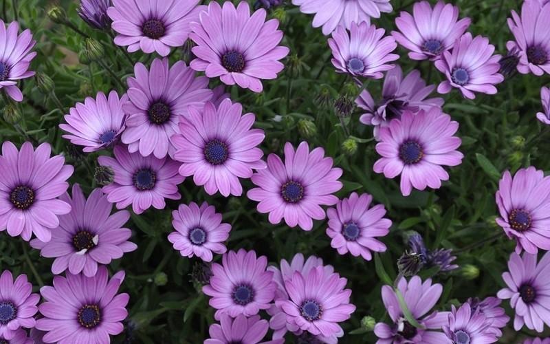 фото цветка2