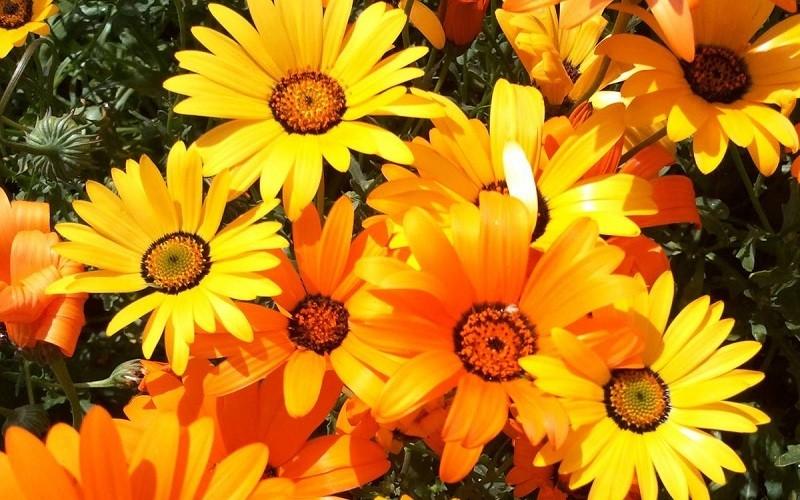 фото цветка4