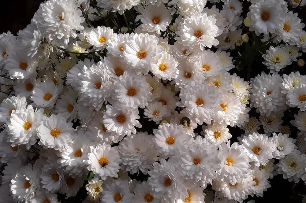 Branbeach white