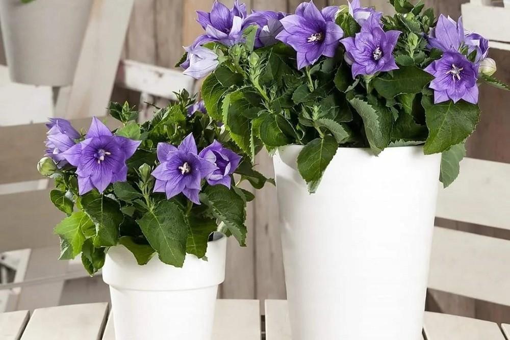 освещение для растения